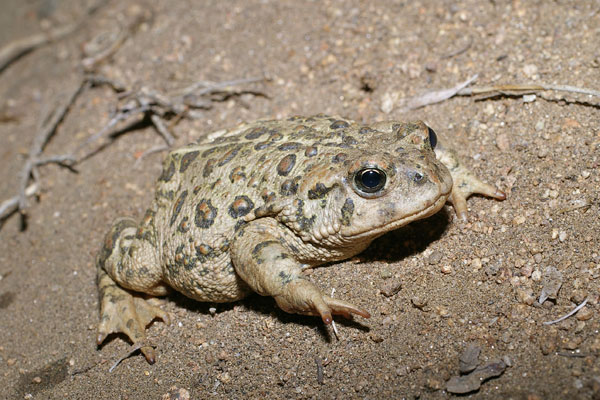 06090841PD_toad.jpg