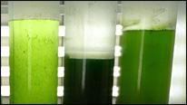 _46654813_algae_bbc_206.jpg