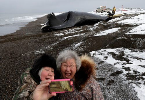 Alaska_Whale_Photo_Gallery_18A.JPG