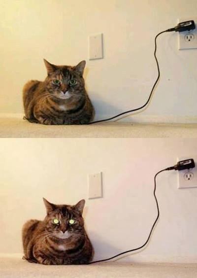 charged cat.jpg