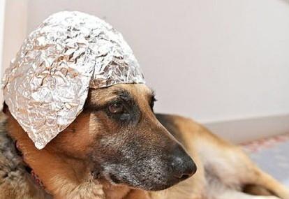 dog tinfoil hat.jpg