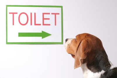 dog-toilet[1].jpg