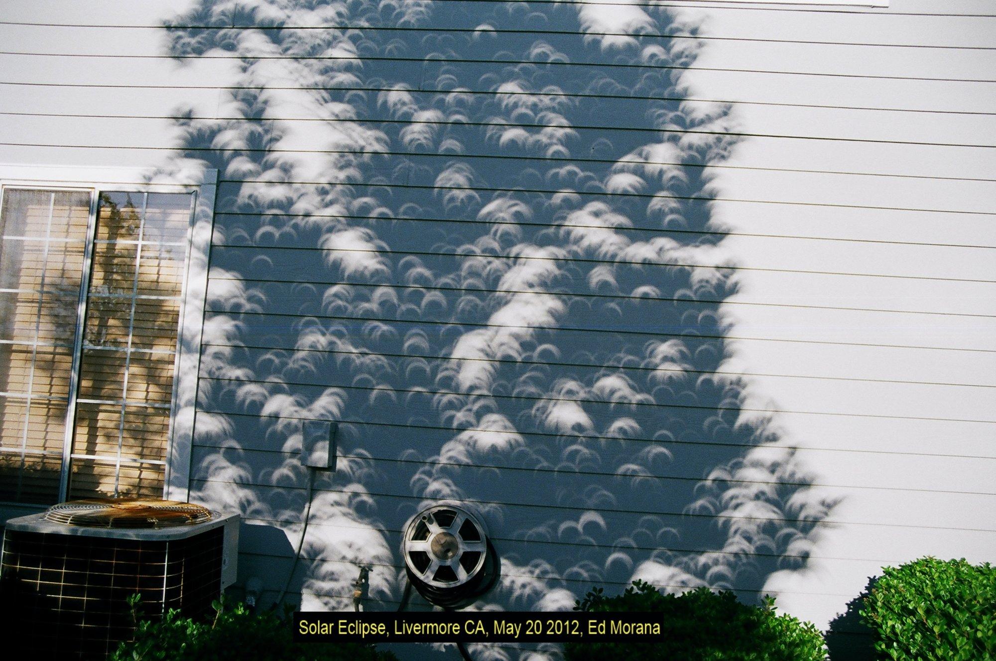 eclipseTreeClose.jpg