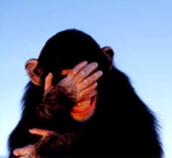 embarrassed-chimp.jpg