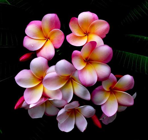 flowers_44.jpg