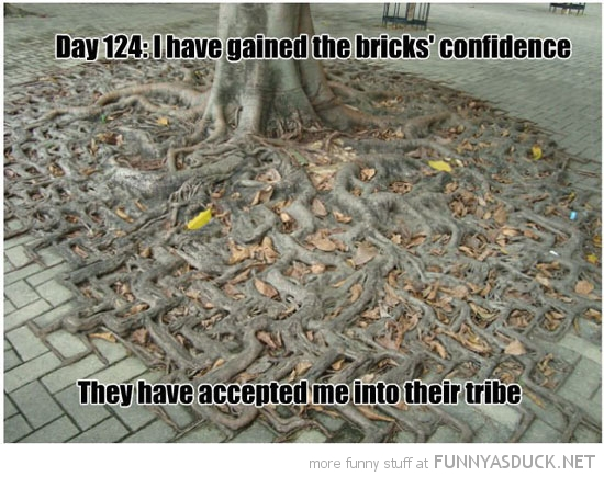 funny-tree-roots-bricks-accepted-me-pavement-sidewalk-pics.jpg