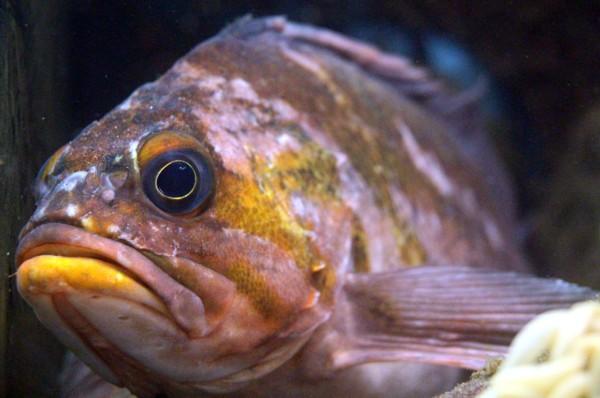 Grumpy-fish.jpg
