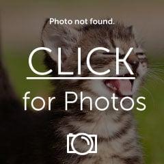 image2-1_zpsckijscxr.jpg