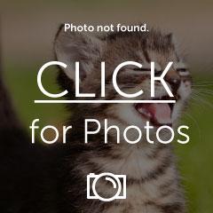 image5_zps2apxauau.jpg
