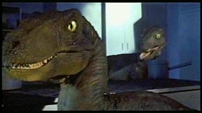 Raptor sml.jpg