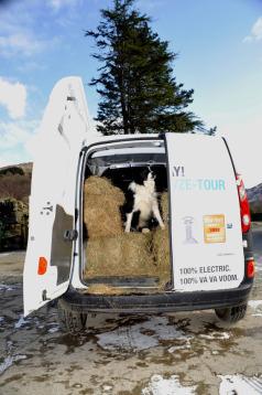 renault-kangoo-van-and-dog.jpg