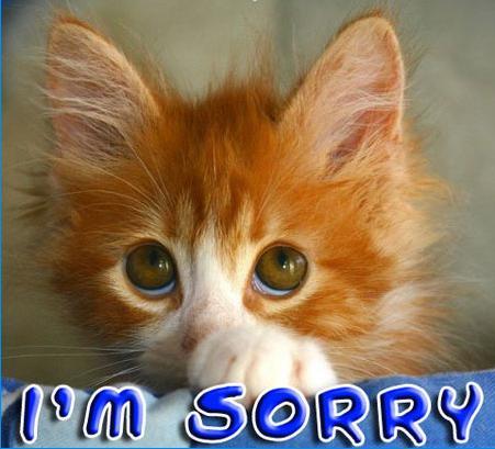 sorry_cat.jpg