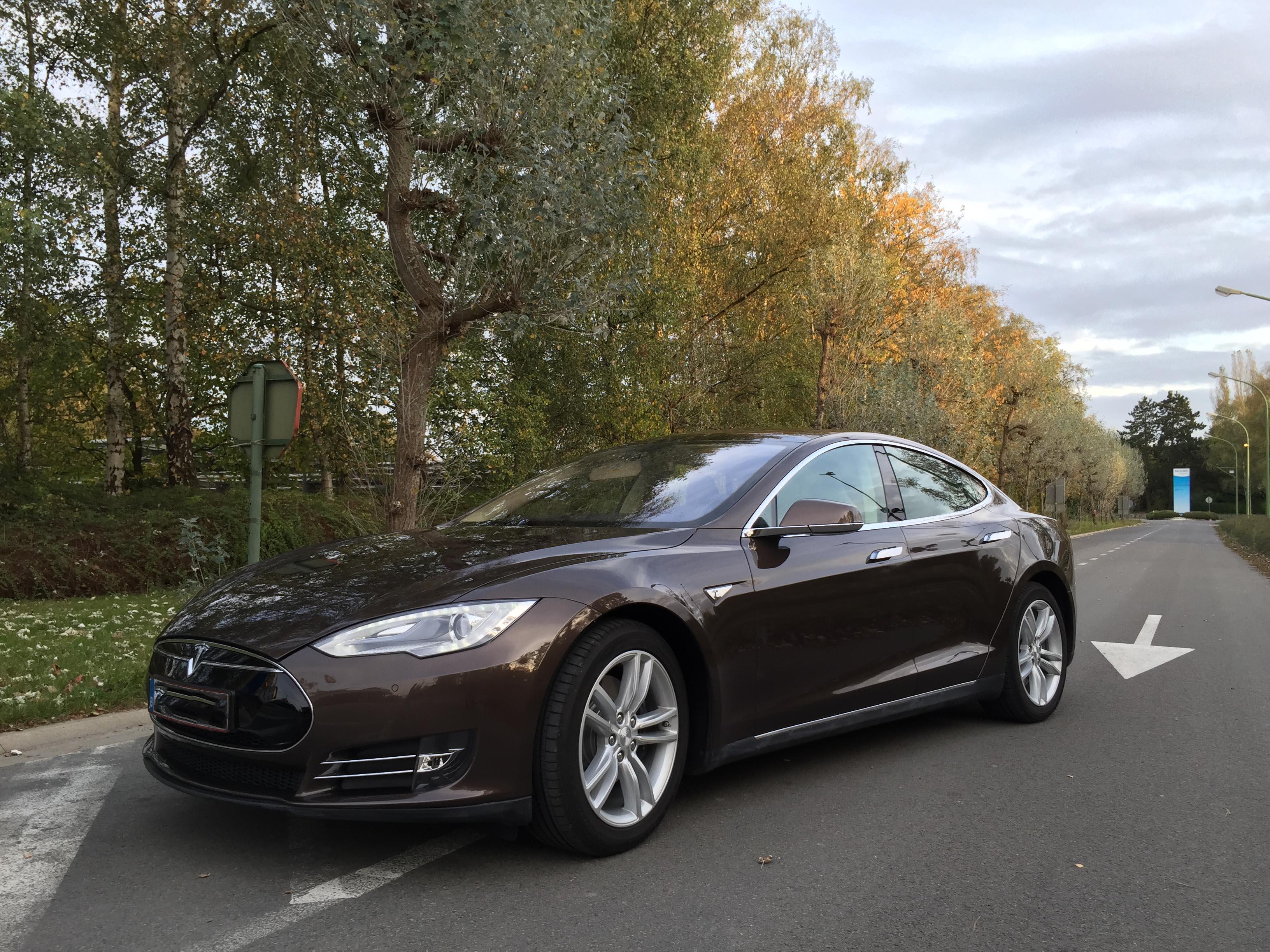 TeslaBruin.jpg