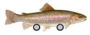 trout-car-300x119.png