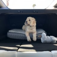 Modification to turn M3 trunk (w/ back seats down) into a dog crate